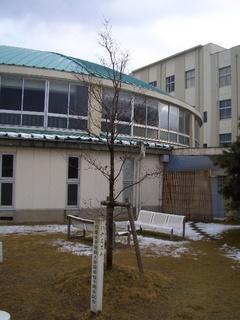 仁愛女子短期大学キャンパス内のハナミズキの写真