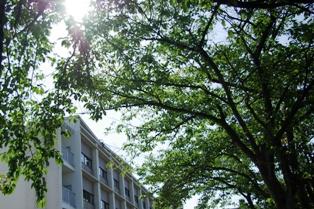 「木陰にのぞむ真夏のA館」の写真