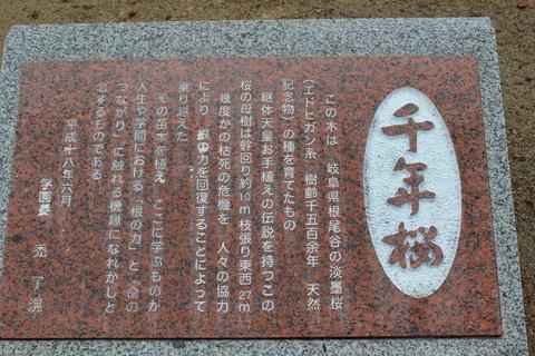 IMG_4879桜.jpg